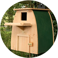 Barn Owl Box
